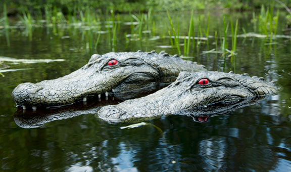 Floating Alligator Head to Keep Birds/Geese Away from Water