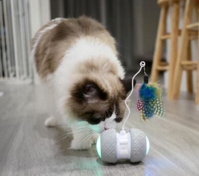 Automatic Interactive Toys for Cats