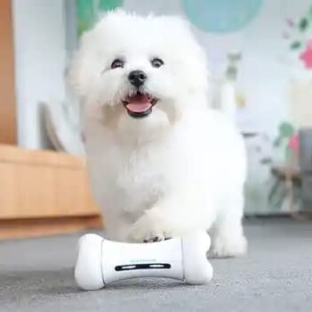 Automatic Bone Toy for Dogs